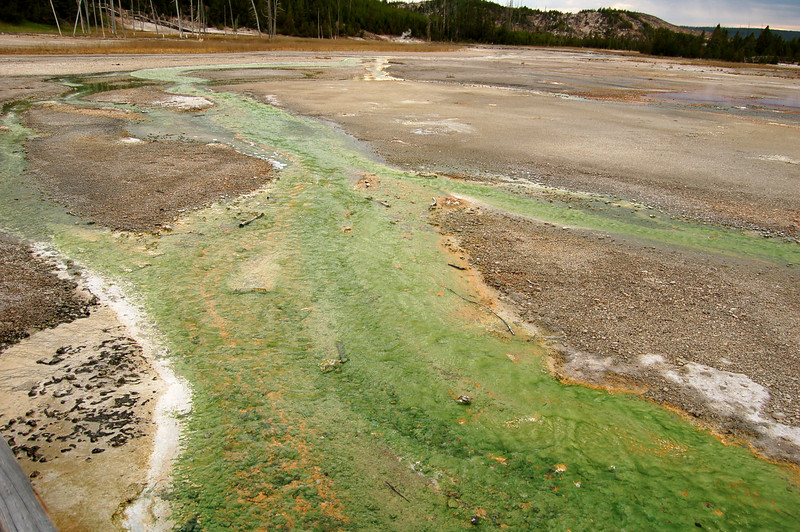 Algae, Yellowstone National Park
