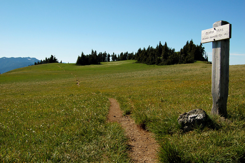 Elma Trail through a meadow, at the top of Hurricane Hill, Olympic National Park, WA.