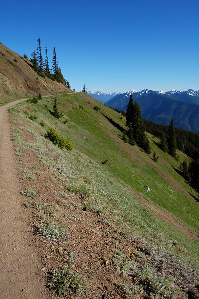 Hurricane Hill Trail, Olympic National Park, WA.