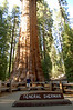 Rod and the General Sherman Tree, Sequoia National Park, CA.