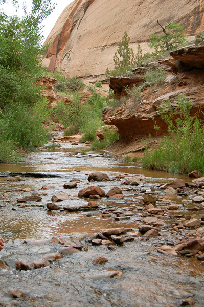 Another stream (or probably the same one) in Negro Bill Canyon, Moab, UT.