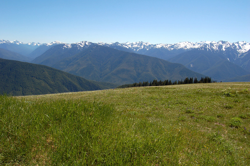 A meadow and the mountains, Olympic National Park, WA.
