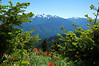 The Olympic Mountains, Olympic National Park, WA.