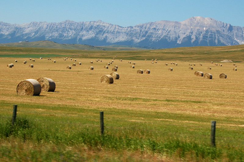 Bales of hay in British Columbia, Canada.