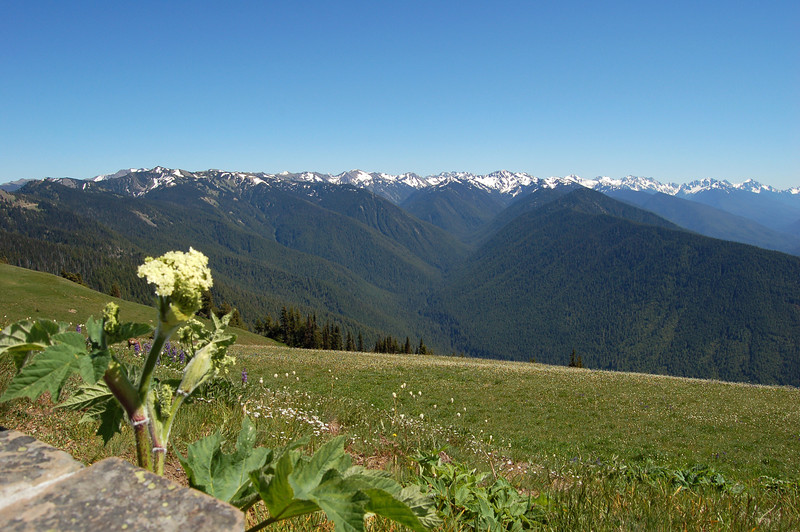 Olympic Mountains, Olympic National Park, WA.