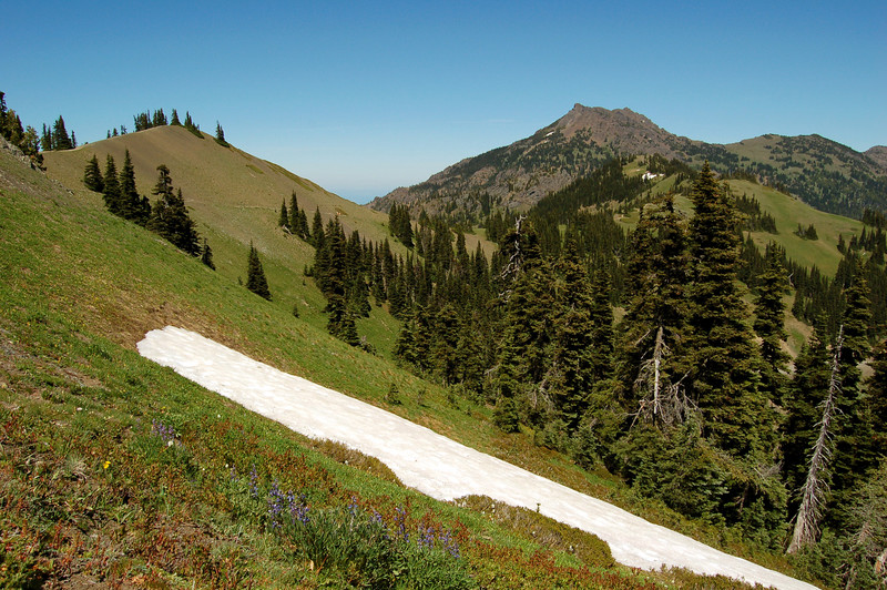 Lingering snow patch, Olympic National Park, WA.