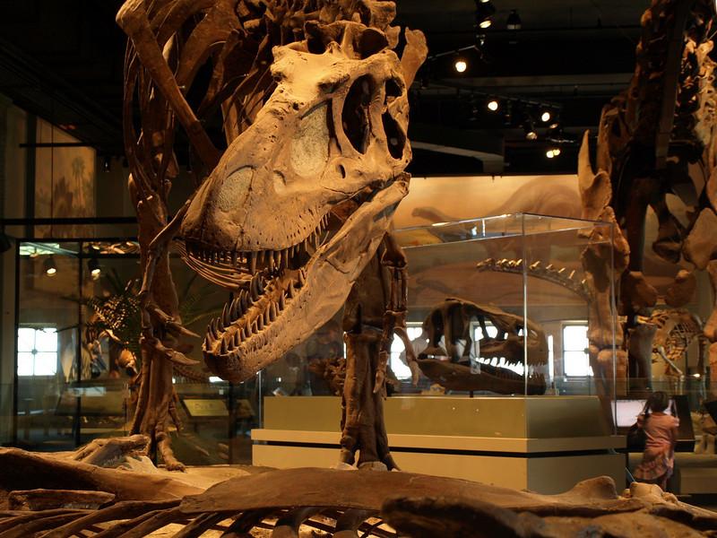 Evolving Earth exhibit, Field Museum, Chicago, June 30, 2008.