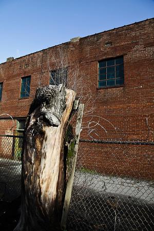 Stumped?  Memphis, TN