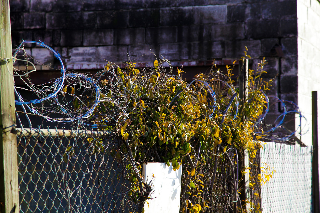 What razor wire? - Memphis, TN