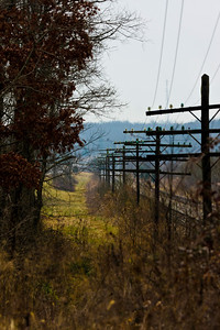 Telegraph poles - Somewhere in Kentucky
