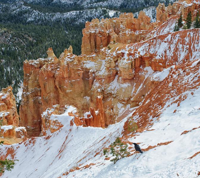Crow Bryce Canyon