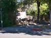 More Deer in Susanville