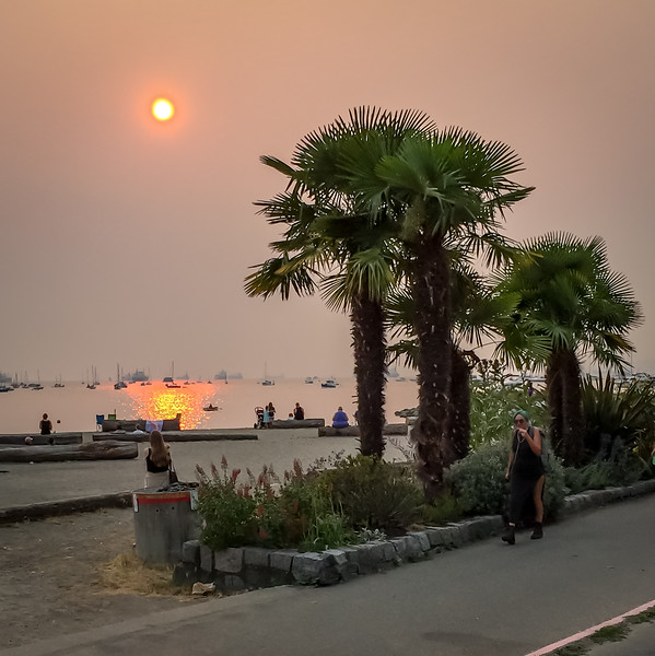 Palm trees in Vancouver with an enhanced sunset courtesty of fires burning in the interior