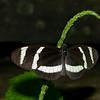 Butterfly Conservatory