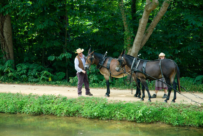 Mules were used to pull the canal boats