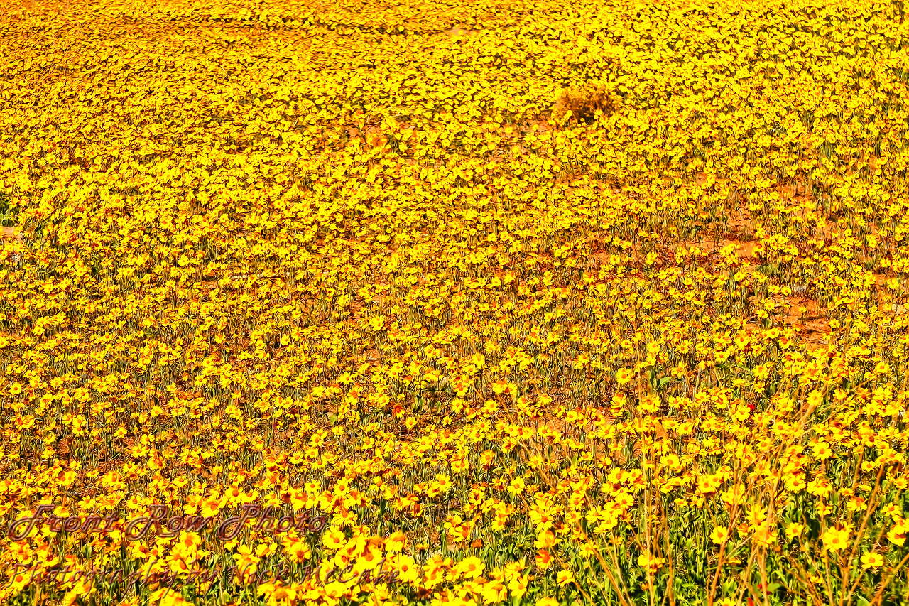 Santa Fe Flowers<br /> The larger, the better on this one.