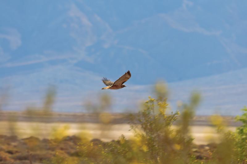 Death Valley-7142