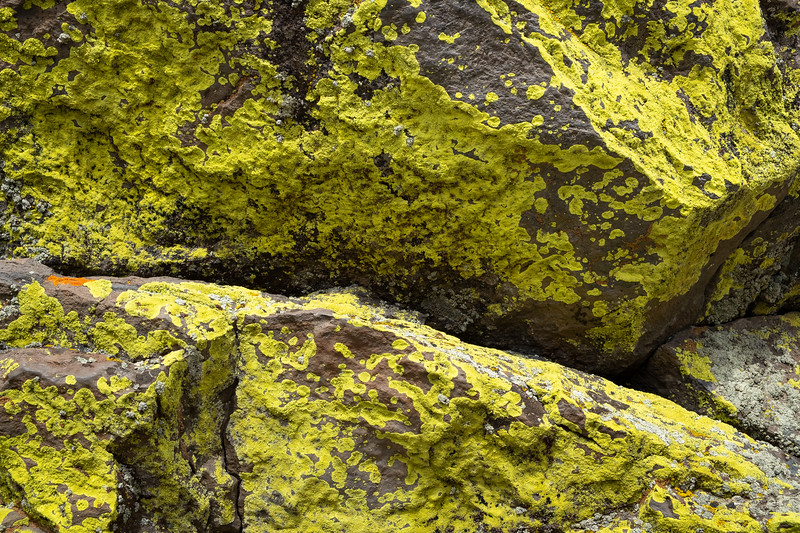 yellow_lichens-3598