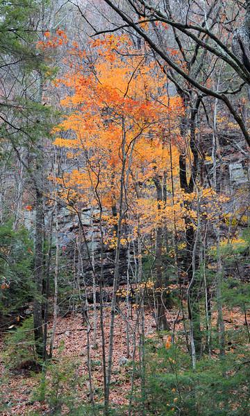 Cloudlands Canyon State Park, Georgia