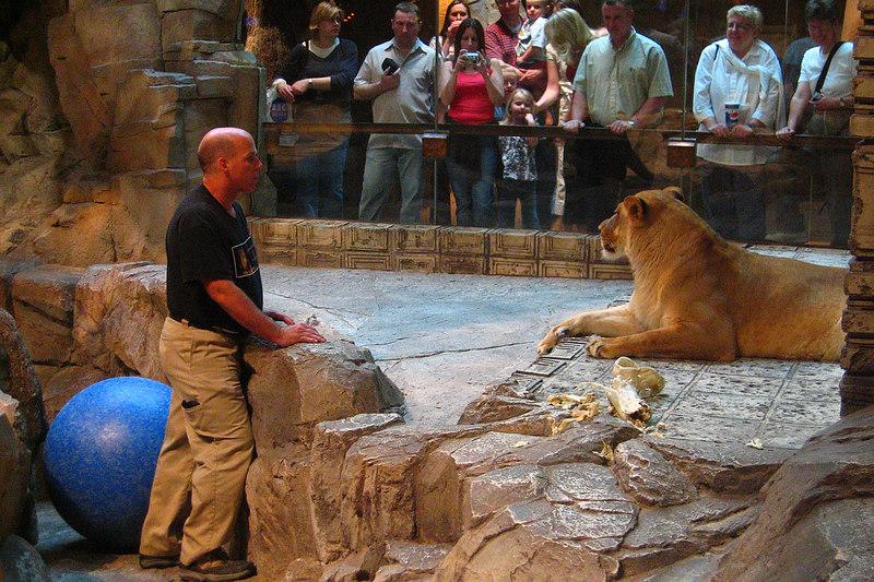 Lion habitat at the MGM Grand