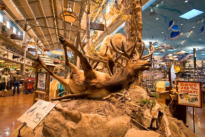 Breakdancing elk at Bass Pro.  The Bass Pro people must want to attract a younger market.