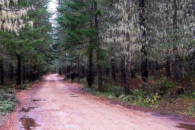 Gifford Pinchot Road Trip-2328