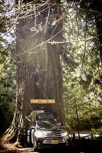 20180401_Redwoods_1002