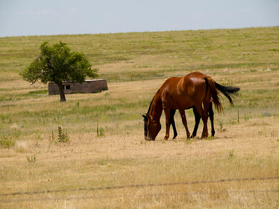 Horses in the Sunflower State Copyright 2010 Neil Stahl