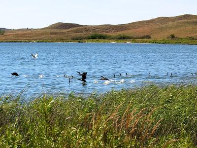 Dewey Lake The cormorants start taking off  Copyright 2011 Neil Stahl Copyright 2011 Neil Stahl