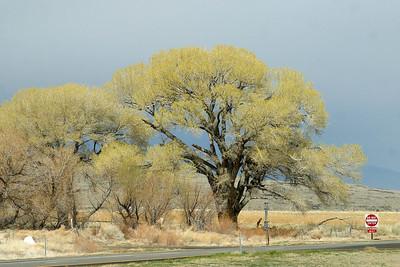 California Hwy 395 near Bishop. March 16, 2011