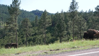 South of Black Hills