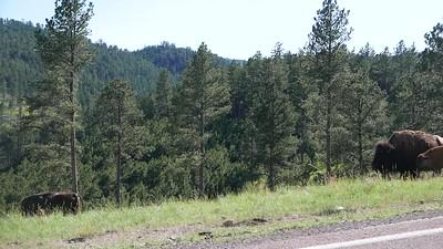 South of Black Hills