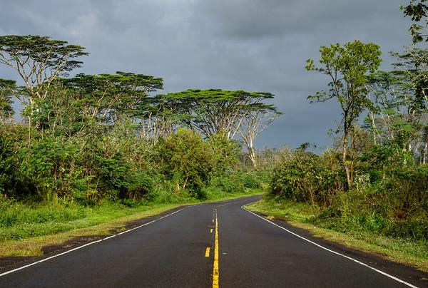 Albezia Road