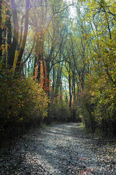 McCook Preserve Trail-0048