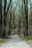 Jogging through the Cottonwoods-0060