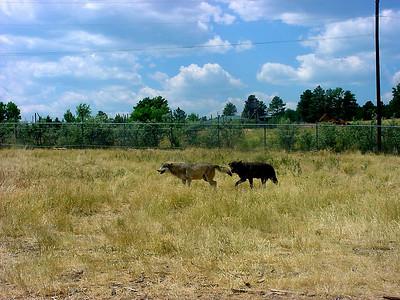 2003-07-30 Geo Walk & Black Hills