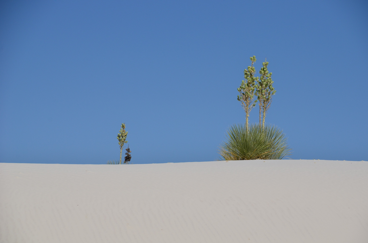 White Sands National Monument, Las Cruces, NM. Endless fields of gypsum sand.