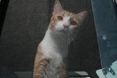 Florida (the cat) - Vermont - September 7, 2009