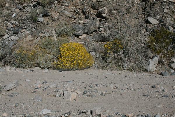 4-wheeling at Pinkham Canyon near Palm Springs, California
