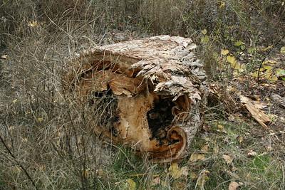 Driftwood RV Park, Los Molinos, CA
