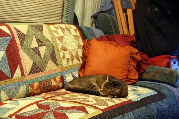 Beavis relaxing