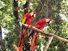 IMG_1756-1BirdSanctuaryRoatan Honduras 122409