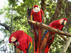 IMG_1758-1Bird Sanctuary Raotan Honduras 122409