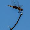 Glider, Goose Island State Park, Fulton, TX