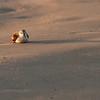 """Hunkered Down"", Mustang Island State Park, TX, September, 2011"