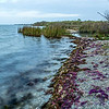 Colorful Seaweed, Goose Island State Park