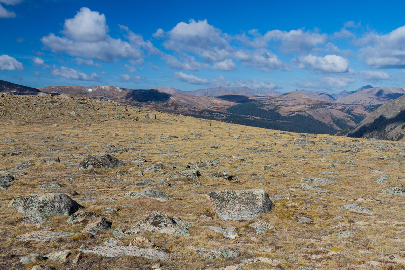 The Alpine Tundra occurs above treeline where the climate is extremely harsh. Fierce drying winds, bitter cold, thin soil and a brief growing season let only specialized plants and animals thrive.