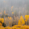 Rocky Mountain National Park<br /> Aspens in the Fog