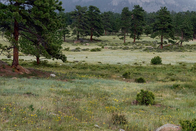 A view from our campsite, Moraine Park campground, Rocky Mountain National Park, Colorado.