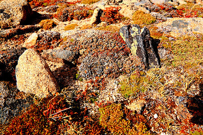 Tundra at Rock Cut